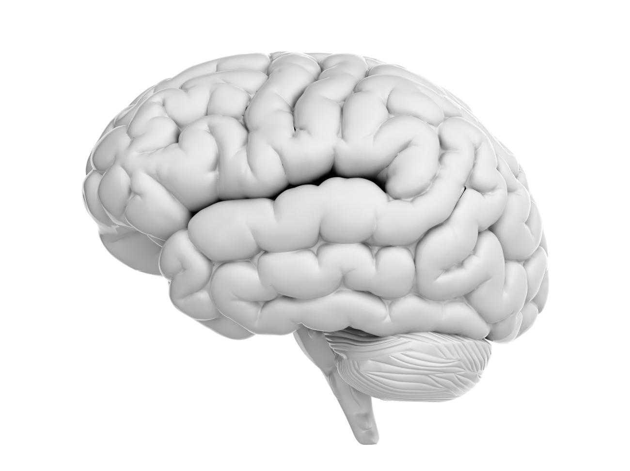 Ohne Hirn geht nichts - Was Sie über Ihr Gehirn wissen sollten ...